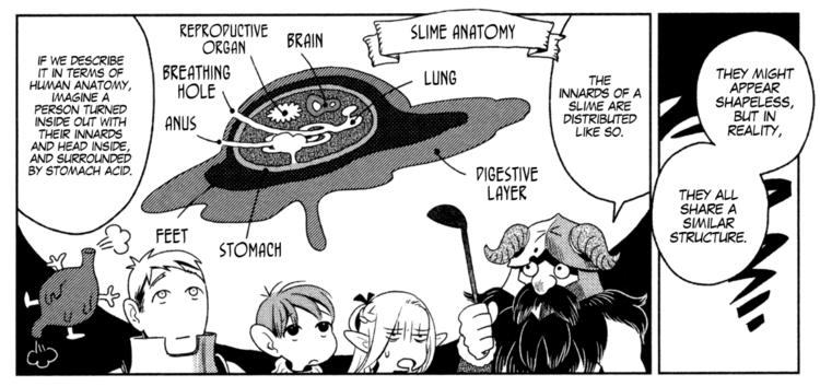 slimeanatomy